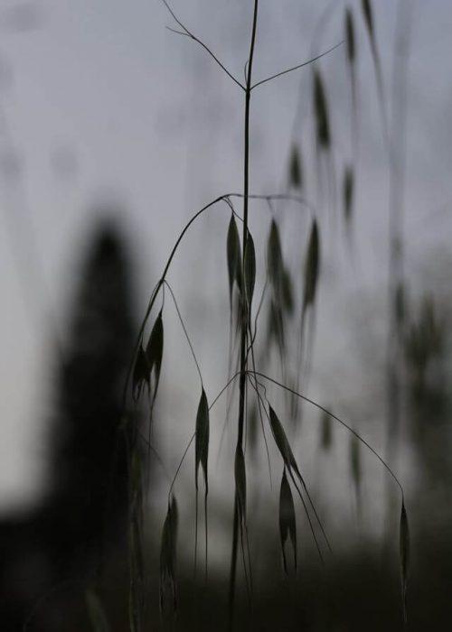 צילום: עליזה פלד